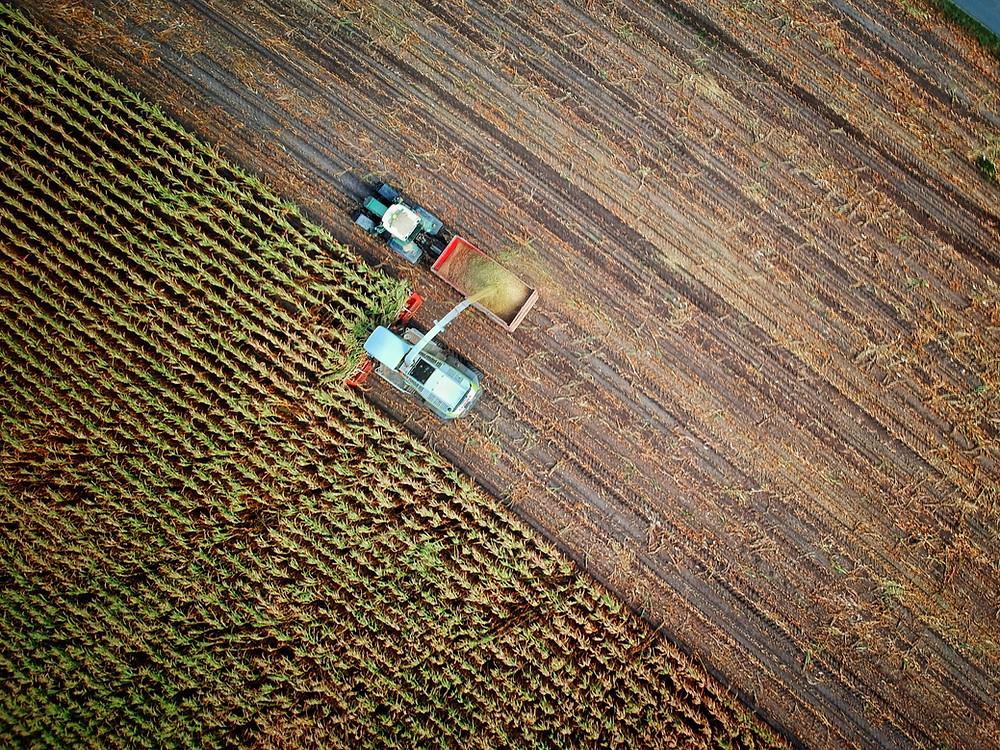 Peat-free garden soil
