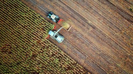 Estiman un aumento de la cosecha de granos