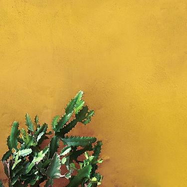 Cactus sul muro giallo