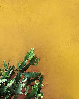 黄色の壁にサボテン