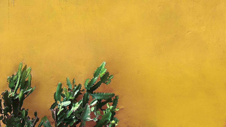 Cacto na parede amarela