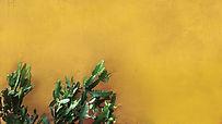 Cactus sur le mur jaune