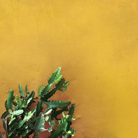 How are Colour Trends Changing in 2020?