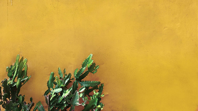 Cactus on Yellow Wall