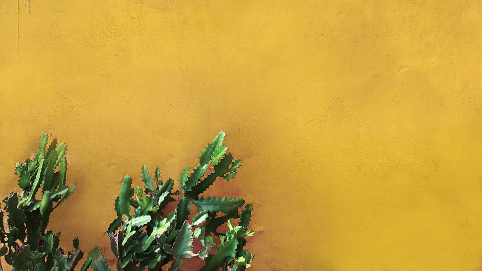 Cactus on Yellow Wall