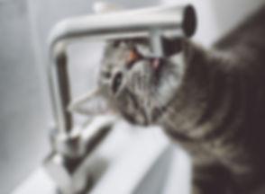 Grijze kat drinken uit de kraan