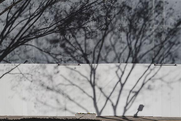Tree Shadows on Wall