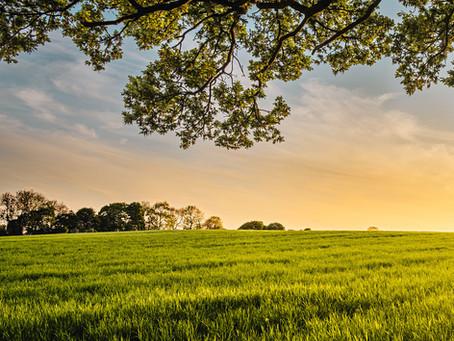 Vihreillä toimilla kestävä tulevaisuus (Vastine Kokkola-lehteen 18.11.2020)