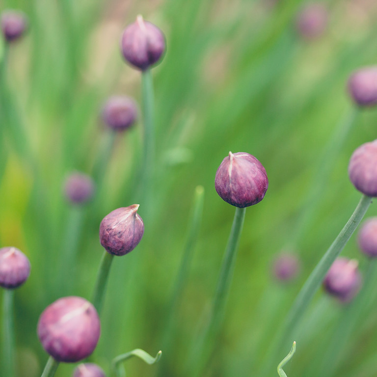 Enter the Quiet - Women's Spring Silent Retreat