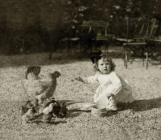 鶏とひよこを持つ少女