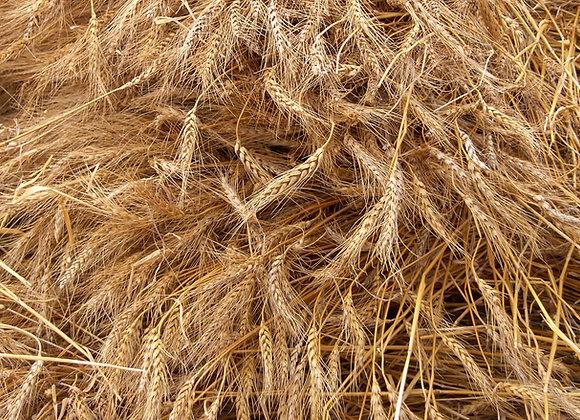 Переработка зерна | финансовая модель бизнес плана