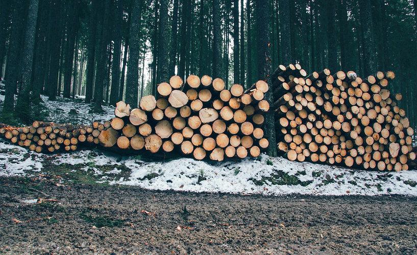 Journaux en forêt