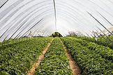 Farms and Greenhouses