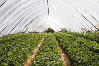 Pennsylvania ranks #2 in the nation in horticulture operations and #10 in total sales