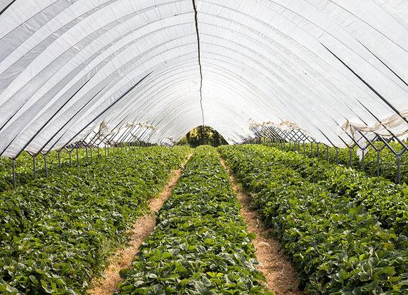 Тепличное хозяйство | теплицы | финансовая модель бизнес плана