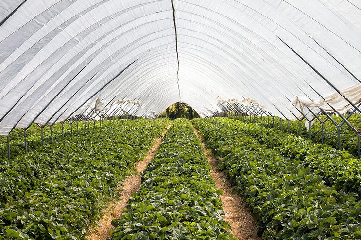 Inside Greenhouse