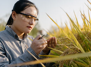 Checking the Crops