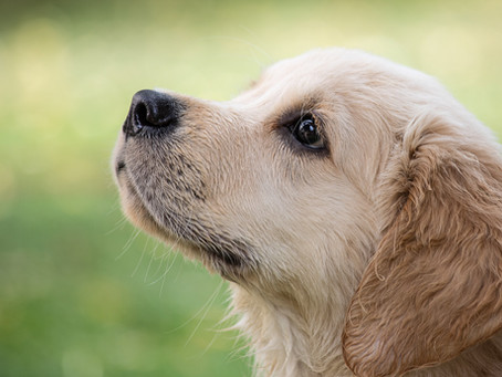 What to Start With Your Puppy Right Away…. And What To Hold Off On