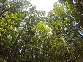 Sol a través de las ramas