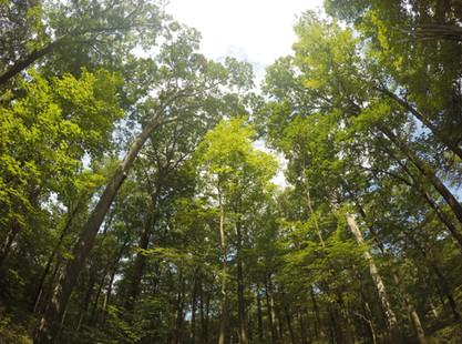 Como usar o estudo de viabilidade econômica no setor florestal para a tomada de decisões