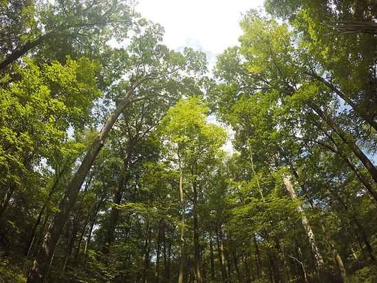 Árvores na floresta