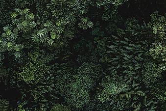 imagem de folhas tropicais na página de vendas do curso online sobre branding ou gestão de marcas