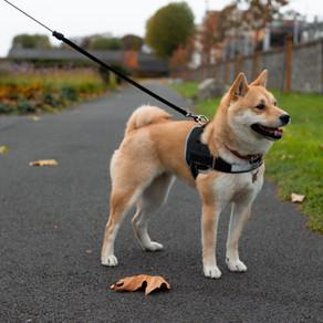 Les tiques chez le chien (3)