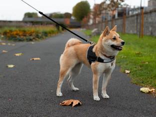 ARRÊTÉ MUNICIPAL relatif à la circulation et à la divagation des chiens.