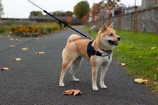 Loose Leash Walking Encino Tarzana