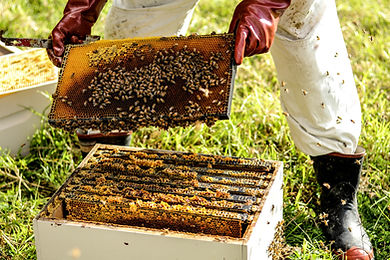 Beekeeper with Bees