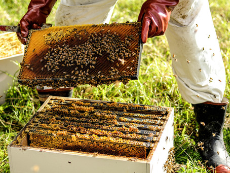 Hosting a Beehive- The Easiest way to Have Honey Bees