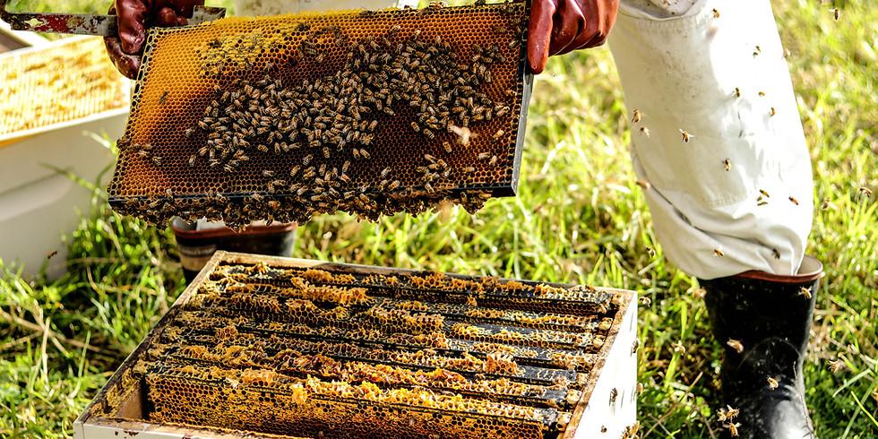 Honeybees Talk & Honey Tasting