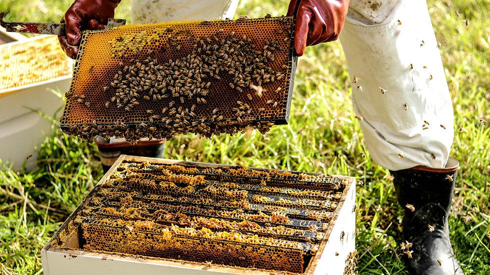 Plaats een bijen- of insectenhotel