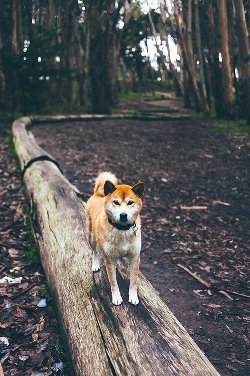 Prova på Hundsporter