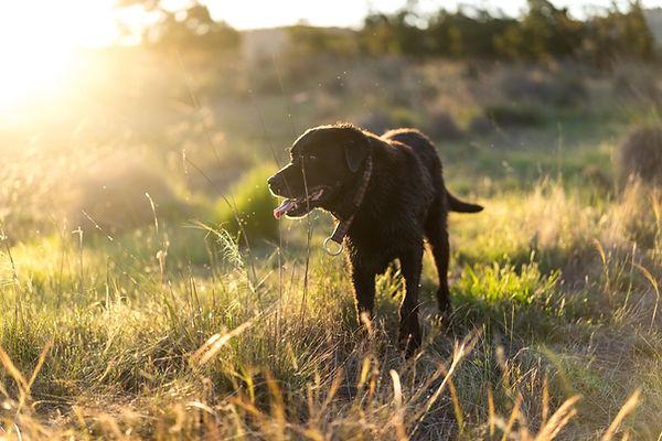 Grasmilben auf Hund hohes Gras