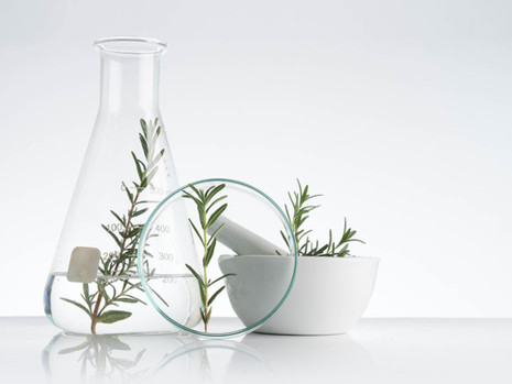 The power of herbs: Rosemary