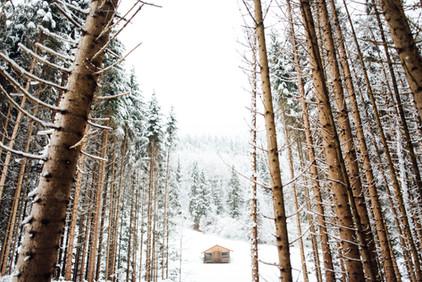 Verzauberter Wald im Winter, www.fewo-dewes.com