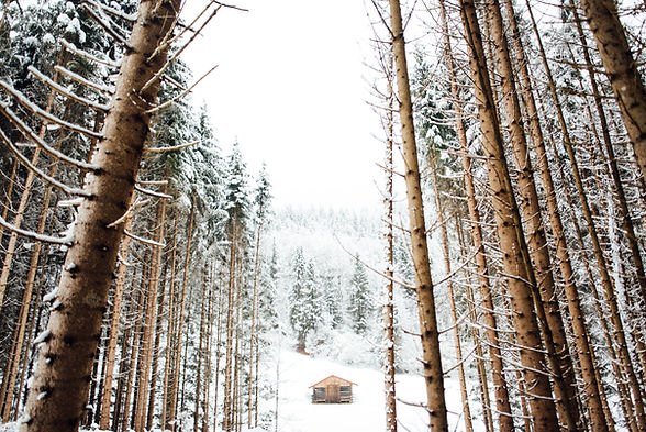 Forest in the Winter