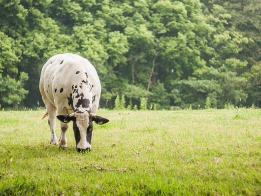 6 Grass-Fed Beef Nutrition Benefits that May Surprise You