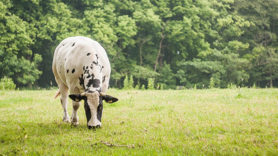 Nature's Pasture Foods-a Grandma's Guide
