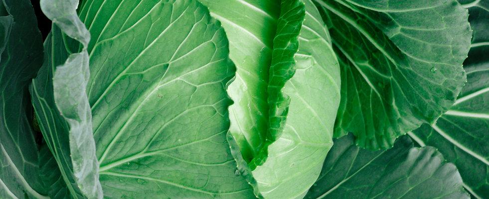 Cabbage / Badha Kopi /  বাধাকপি per kg