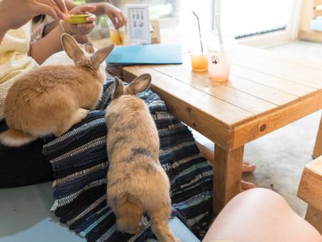 Fütterungsempfehlung für Kaninchen