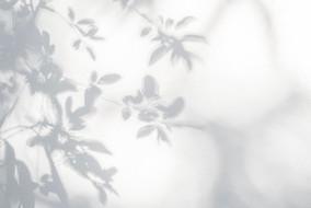 Leaves Shadow