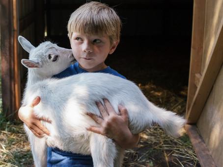 Los beneficios de consumir leche de cabra