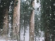 Chute de neige à GNAW LAND