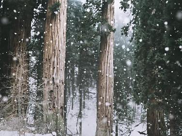 تساقط الثلوج في GNAW LAND