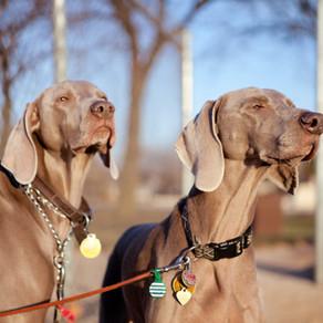Identification des chiens et chats, évolution de la législation