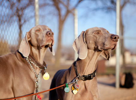 Dogs Sniffing While Walking