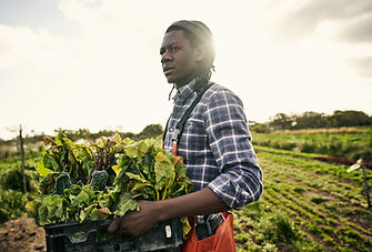 Farming Leafy Greens