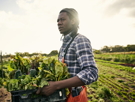 Where Are All The Black Farmers?